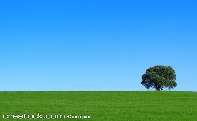 Isolated tree in the green field.